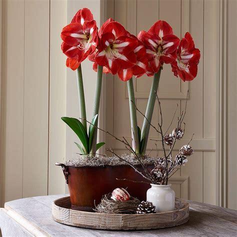 Plantas de interior con flor  para todo el año