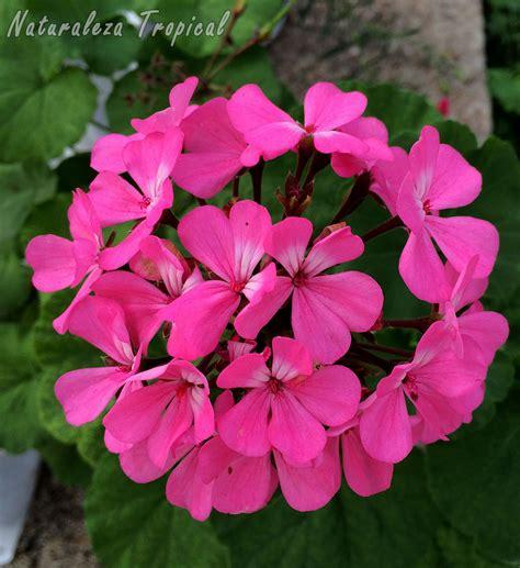 Plantas De Interior Con Flor Todo El Año