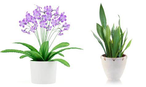 Plantas de interior curiosas   Bricomanía