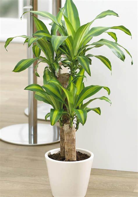 Plantas de interior grandes y fáciles de cuidar