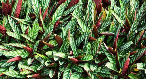 Plantas de interior que necesitan poca luz   Plantesdecor
