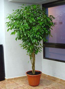 Plantas de interior resistentes a todo