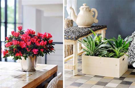 Plantas de interior resistentes.