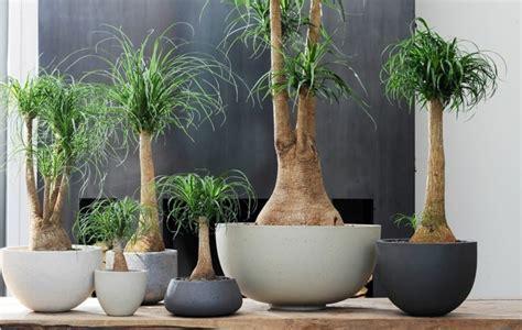 Plantas de interiores resistentes y lo específico de sus ...