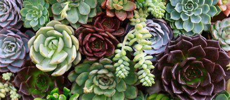 Plantas de secano para crear jardines increíbles | Endesa X