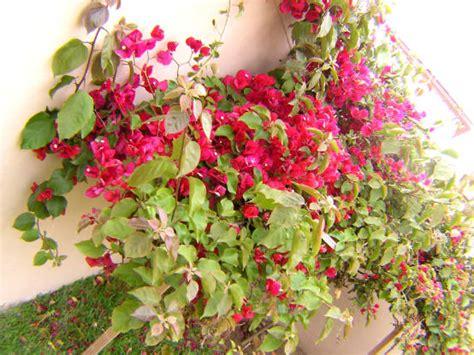 Plantas de sol para jardines | homify | homify