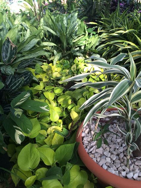 Plantas de sombra | Flores, plantas y sus nombres ...
