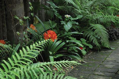 Plantas De Sombra Total Exterior   Get Images