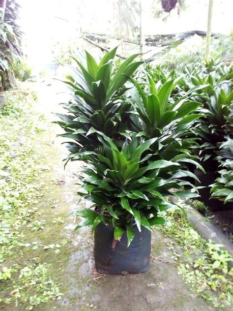 Plantas Exterior E Interior   $ 100.00 en Mercado Libre