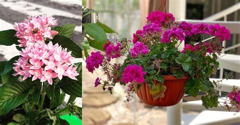 Plantas fáciles de cuidar que dan flores todo el año ...