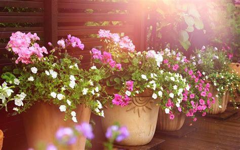 Plantas; grandes aliadas contra el calor en el verano   La ...