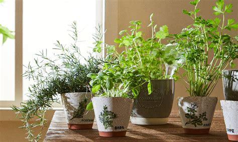 Plantas: las mejores hierbas aromáticas para cultivar en ...
