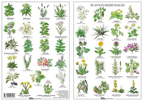 PLANTAS MEDICINALES   MIGUEL JIMENEZ HERNANDEZ   Comprar ...