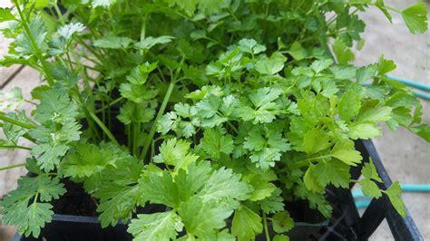 Plantas medicinales silvestres   Usos, clasificación y ...
