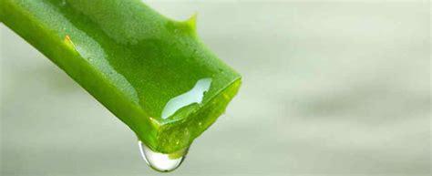 Plantas medicinales   Usos y propiedades