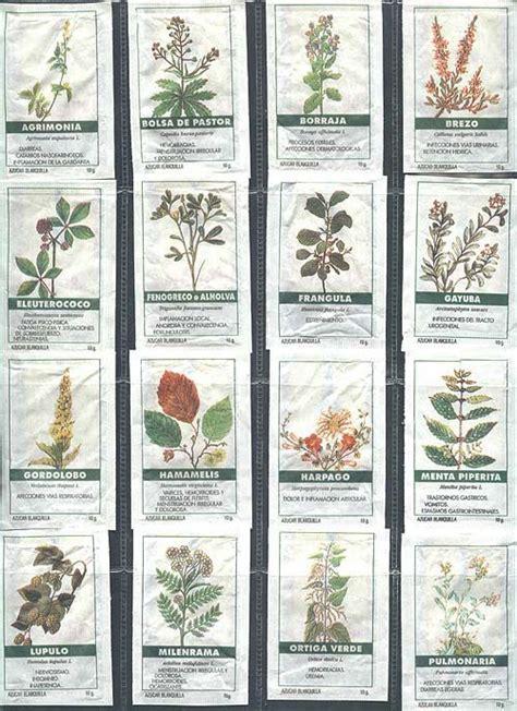 plantas medicinales y aromáticas: plantas peru