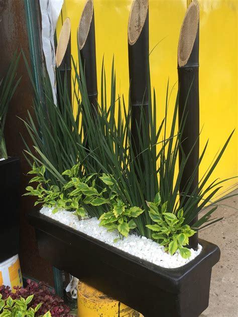 Plantas Naturales Para Interior En Maceta Solo Cdmx ...