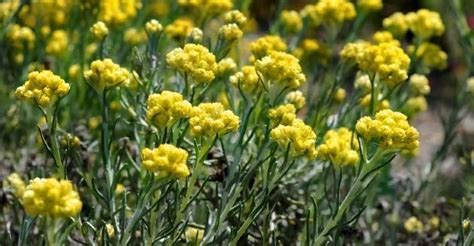 Plantas ornamentales   Curiosidario
