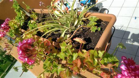 Plantas para atico en Barcelona, soleado y a veces con viento.