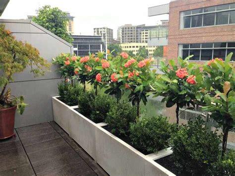 Plantas para BALCONES y TERRAZAS exteriores