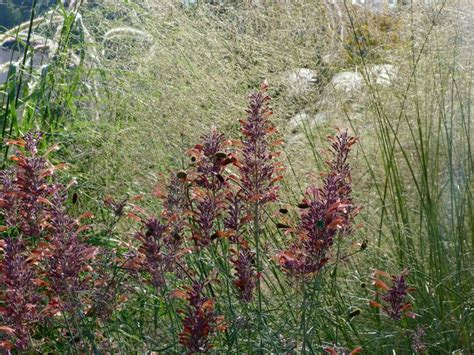 Plantas para clima mediterráneo y jardines naturalistas ...