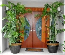 Plantas para darle vida al exterior de su casa | Gente ...