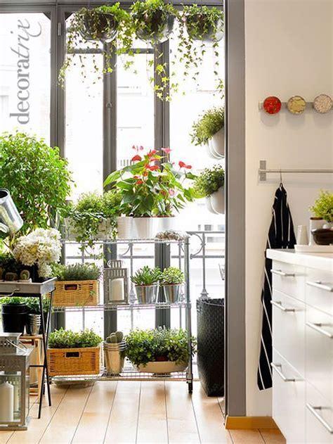 Plantas para decorar la cocina