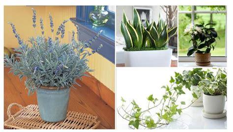 Plantas para Dormir Bien Cuidado de Belleza