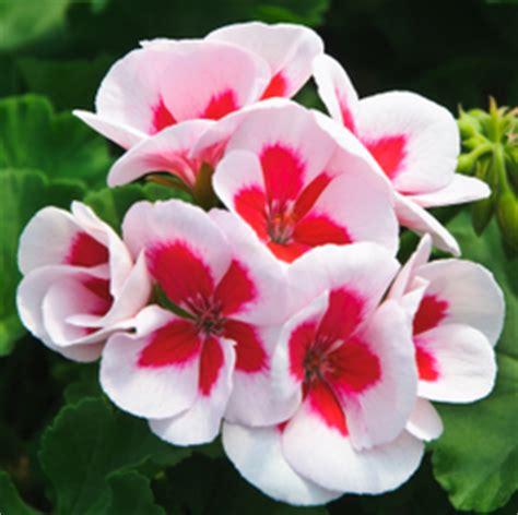 Plantas para el invierno resistentes al frío