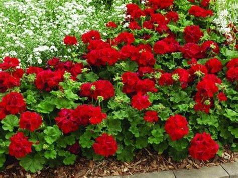 plantas para exterior resistentes al sol | Diseño de ...