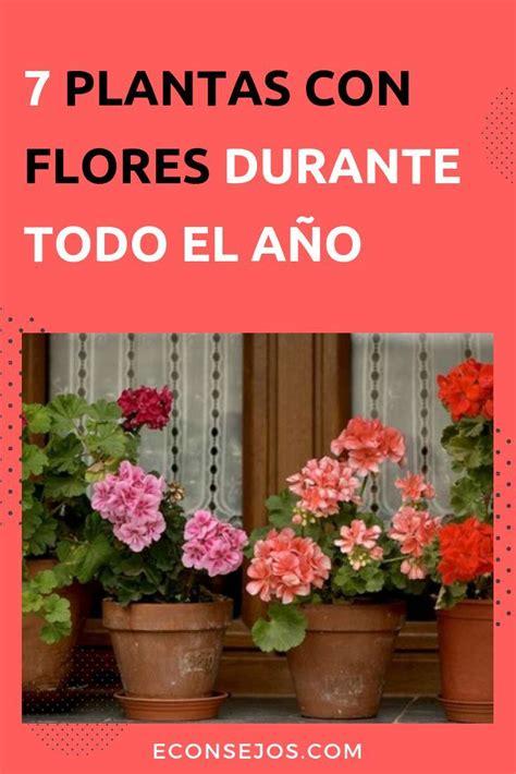 Plantas Para Jardin Exterior Con Flores Todo El Ano