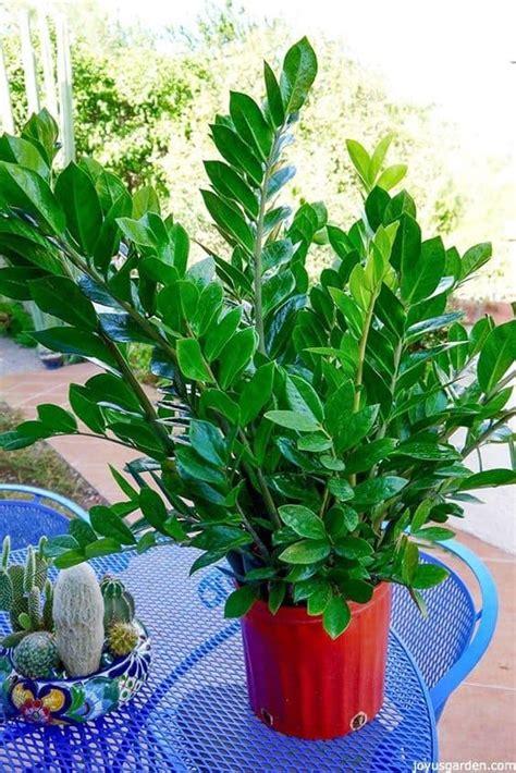 Plantas Para Jardin Exterior Resistentes Al Sol