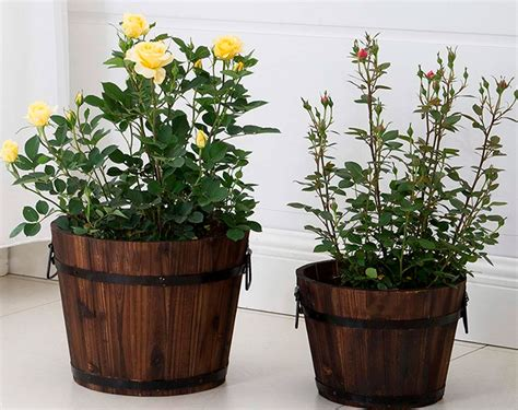 Plantas Para Macetas Exterior