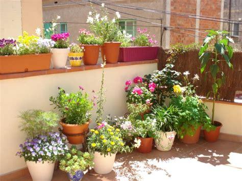 Plantas para macetas   Plantas para.com