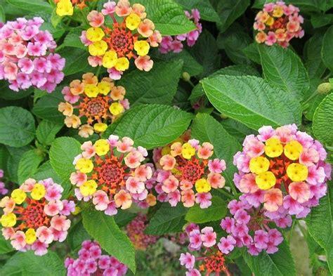 plantas para sol   facilisimo.com