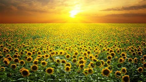 Plantas para sol   Plantas para.com