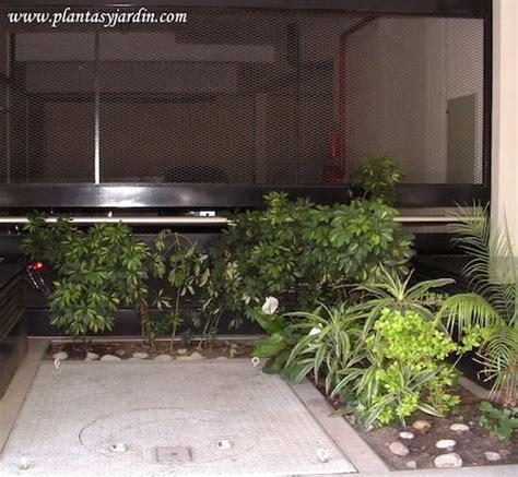 Plantas para sombra | Plantas y Jardín