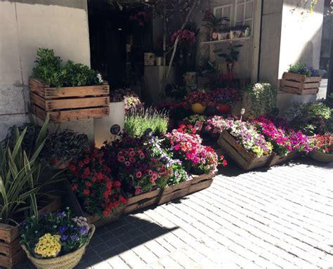 Plantas para terraza: Especial Decoración