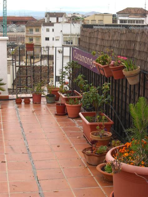 Plantas para terraza muy soleada y sistema riego