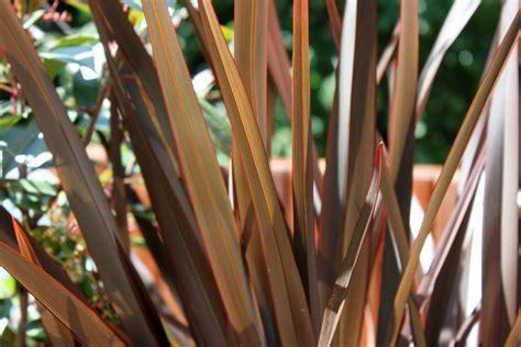 plantas para terrazas | Plantas, Habitaciones verdes, Terrazas