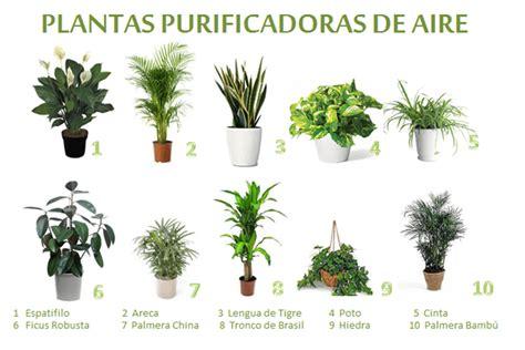 Plantas purificadoras de aire para interior: ¿Cuáles son ...