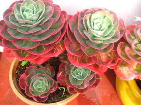 plantas que aguantan el sol directo | Cuidar de tus ...