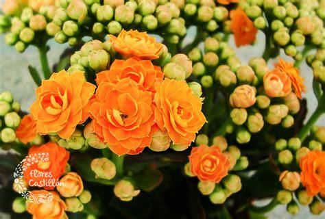 Plantas que florecen todo el año | Flores Castillon