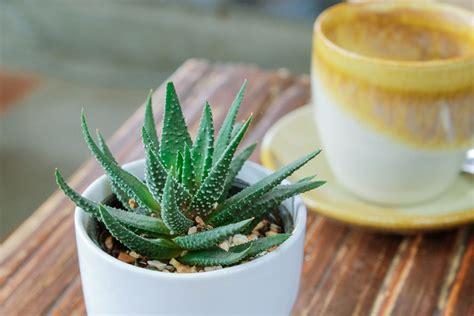 Plantas que necesitan poca luz   Amigos de la Jardinería