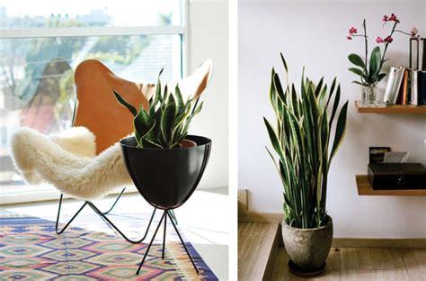 Plantas que Requieren Poca Luz | BlogUp Español
