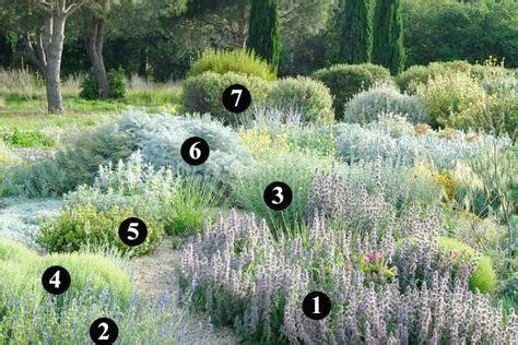 Plantas que soportan heladas y son resistentes a la sequía ...