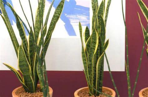 Plantas que soportan la falta de luz