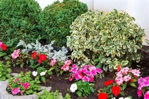 Plantas resistentes: 8 especies ornamentales para crecer ...