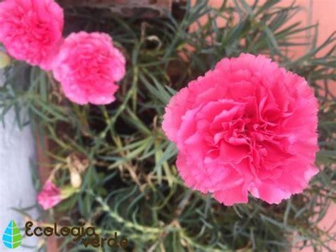 Plantas resistentes al invierno para macetas exteriores ...