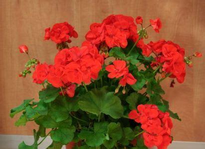 Plantas resistentes al sol | Plantas de sol pleno, Plantas ...